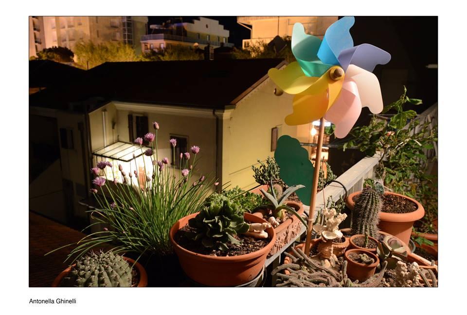 Antonella Ghinelli Menzione giuria Nel mio giardino 2017 Cattolica